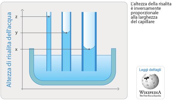 schema-capillari_2